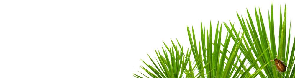 palmetto1